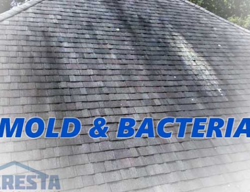 Mold & Bacteria on Roof