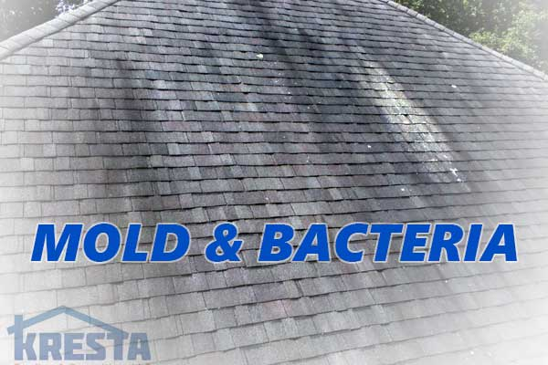 Mold And Bacteria Deteriorate Roofs Get Your Home Checked