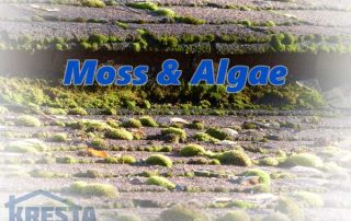moss and algea on roof roofing company san antonio
