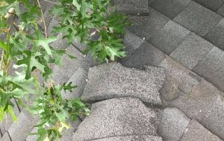 trimmed tree branch damage to roof inspection free san antonio texas roofers