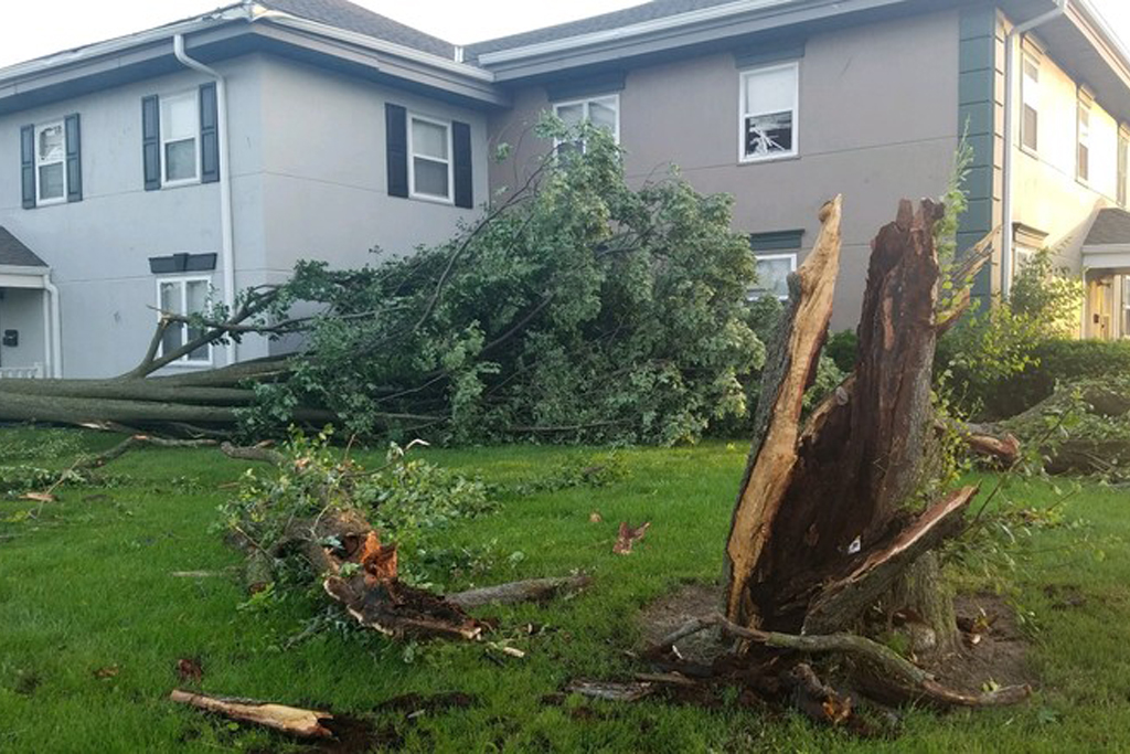 fallen trees against house after storm